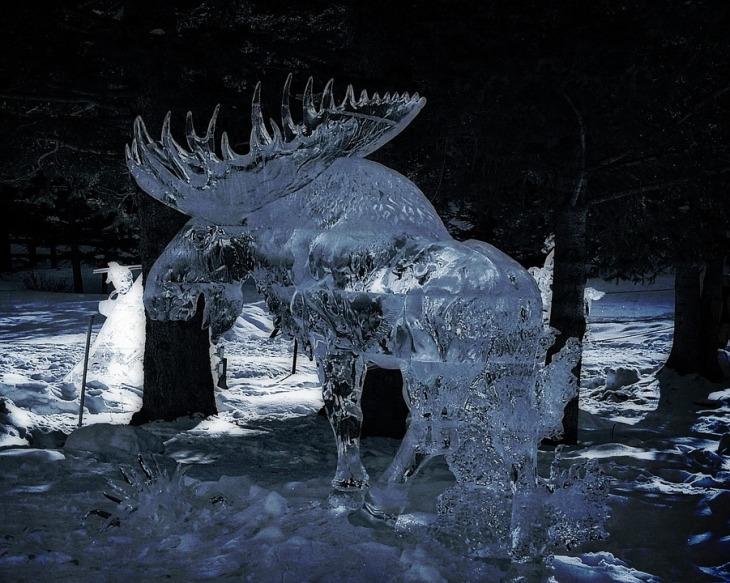 MT Ice Moose